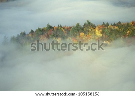 Autumn Trees in the Mist, Stowe, Vermont