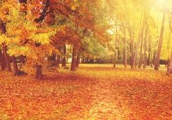 Autumn trees in the park. Red orange yellow trees. Autumn. Fall. Autumnal Park. Autumn Trees and Leaves in sun light. Autumn scene