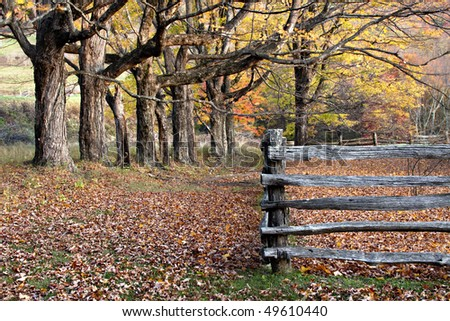 Autumn trees, leaves and split rail  wooden fence in Virginia Mountains