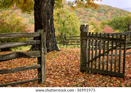 Autumn trees, leaves, fence and gate  in Virginia Mountains