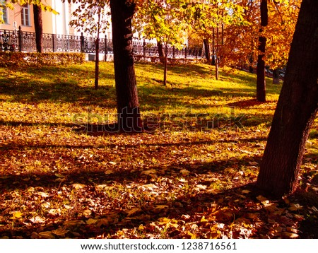 Autumn trees on ground with fallen leaves background. Trees shadows on ground. Meadow with maple leaves photo. Autumn lawn with fallen leaves. Fall season concept image. Defoliation in autumn season