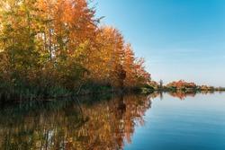 Autumn trees on the coast of a river