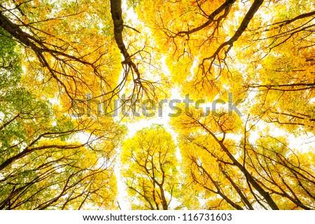 Autumn trees pattern