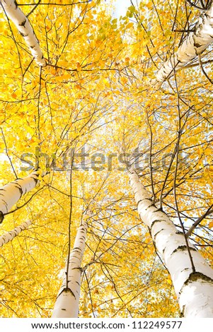 Autumn trees with yellowing leaves against the sky
