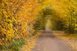 Autumn tunnel through wooded countryside. Amazing autumn tunnel path trough a colorful forest