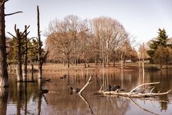 Autumn view of a pond in the park with ducks in it and trees and a log