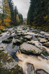 Autumn view of a river in Alaska like forest. Wild creek or river in the middle of autumn forest. Mountain stream with cascades and waterfalls. Deep mountian woods. Sumava national park, Vydra river.