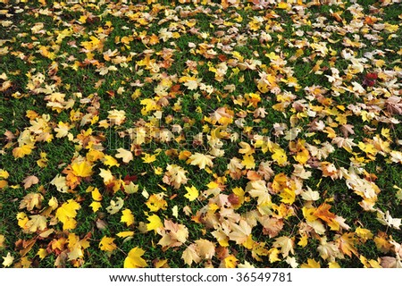 Autumn view of beacon hill park, victoria, british columbia, canada