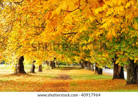Autumn view of the hiking trail in beacon hill park, victoria, british columbia, canada