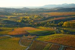 Autumn vineyards in the wine-making region of La Rioja (Spain)