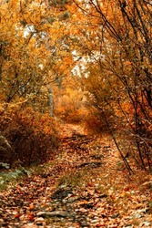 Autumn walk along the old road in the forest. Autumn landscape with colorful fall foliage trees. Beautiful autumn trail.