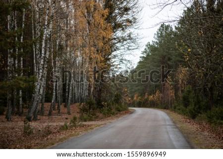 Autumn walk in the forest in Podlasie region Zdjęcia stock ©