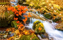 Autumn waterfall in mountain river water
