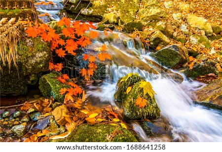 Autumn waterfall river stream view. Waterfall in autumn. Autumn waterfall leaves. Autumn waterfall leafs