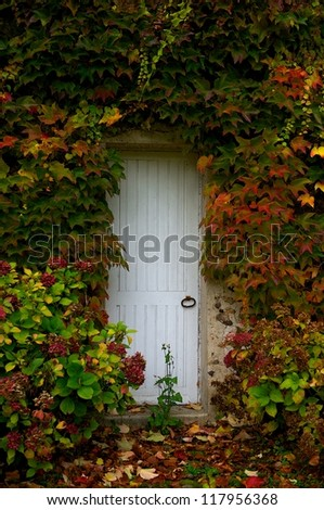 Autumn, white door with red, yellow, orange, golden, colorful autumn leaves, exterior, autumn background, autumn season, colorful autumn fragment, autumn leaves, colorful autumn
