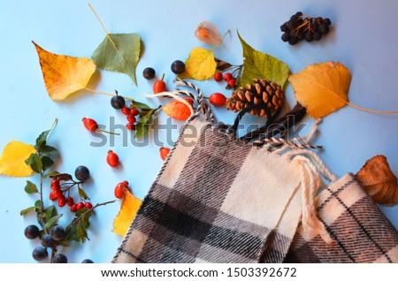 autumn wild berries different berries. #1503392672