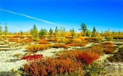 Autumn wilderness steppe nature landscape. Autumn plain steppe view. Steppe nature in autumn