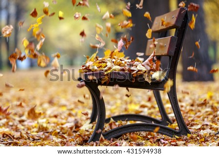 Autumn wind in the park
