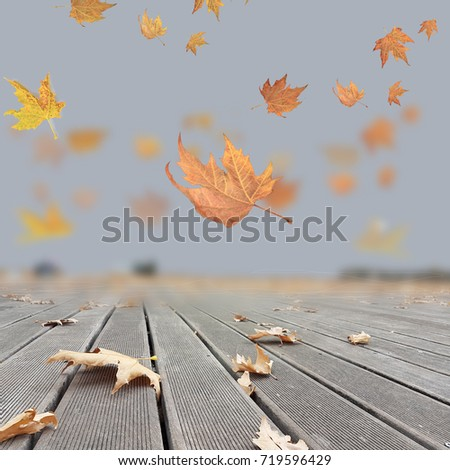 autumn winter background leaves ...