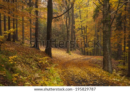 Autumn wood full of fallen leaf and the crossroad