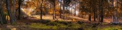 autumn woodland england uk
