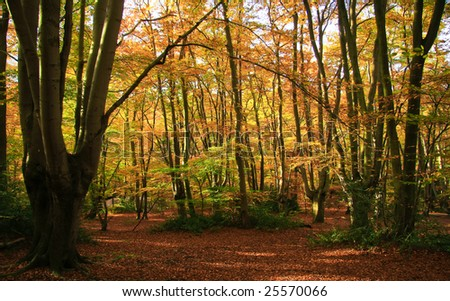 Autumn Woodland - Epping Forest, England