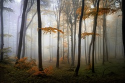 Autumn woods in the mountain