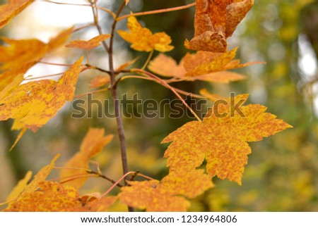 Autumn woods, leaves detail #1234964806