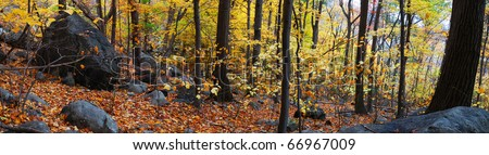 Autumn woods panorama with colorful trees and rocks in forest.