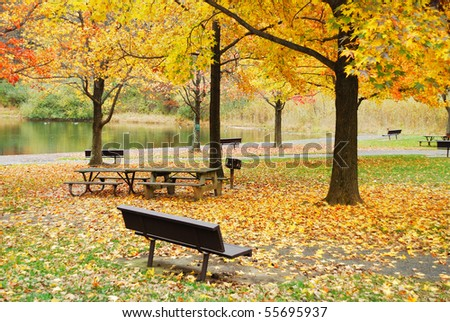 Autumn yellow foliage in park with barbeque grill and bench chair by lake