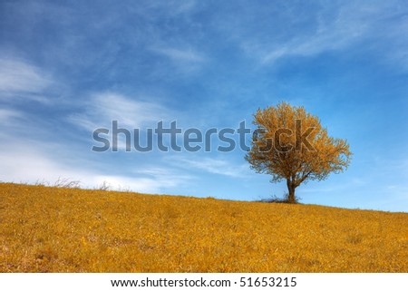 stock-photo-autumn-yellow-grass-field-and-blue-cloudy-sky-with-lonely-oak-tree-51653215.jpg