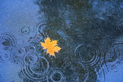 autumn yellow leaf in puddle, natural background. rainy day. autumn season atmosphere image. symbol of fall time. top view