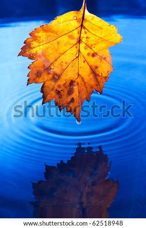 Autumn yellow leaf with drops in the rain on a dark blue background. Under leaf - a pool.