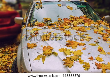 Autumn yellow leaves on car's hood and glass with natural water drops on the blurred background. Fallen leaves and rain drops on a car windshield with city in the background.