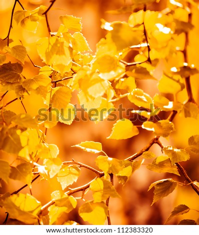 autumn yellow leaves, shallow focus