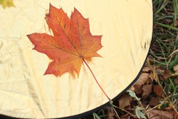 Autumn yellow, red, green leaves in the photo reflectors. Maple leaves, autumn concept. The concept of the photographer's work and creativity
