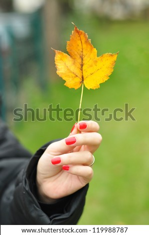 autumn yellow tree leaf in woman hand in nature