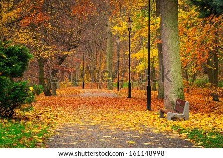 Autumnal alley in the park, Poland