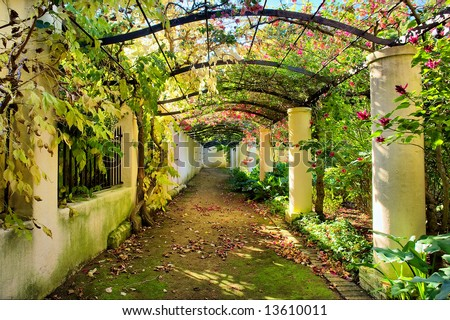 Autumnal arch covered by vine.Shot in Vergelegen wine farm/estate, near Stellenbosch, Western Cape, South Africa.