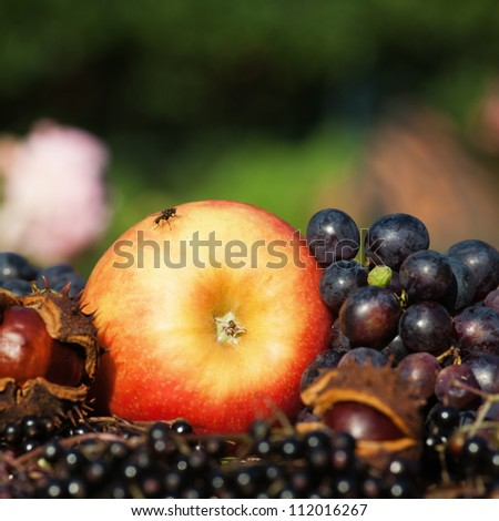 autumnal arrangement of an apple with other autumnal fruits