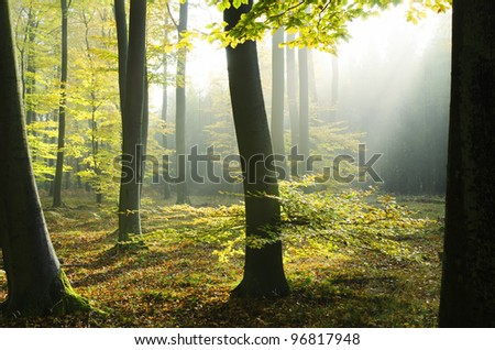 autumnal atmosphere in the forest