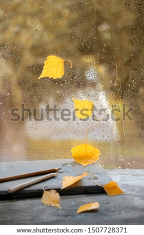 autumnal atmospheric composition with birch leaves and book. autumn season, rainy day. fall time background concept. copy space.  #1507728371