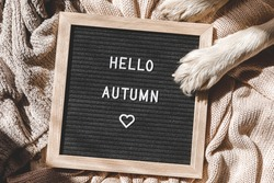 Autumnal Background. Puppy dog paws and black letter board with text phrase Hello Autumn lying on white knitted sweater. Top view flat lay. Thanksgiving banner. Hygge mood cold weather concept