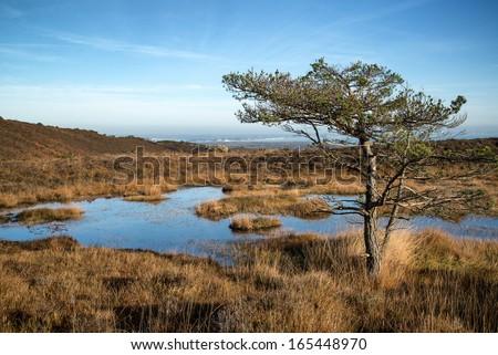 Autumnal blue sky over marshlands landscape