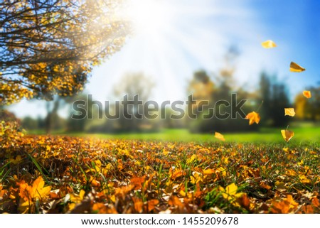autumnal day in golden october, fall leaf, natural autumn background
