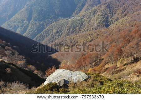 Autumnal Forest and Shale-Rock at the Mountainside of Veddasca Valley east of Lago Maggiore, Ticino, Italy #757533670