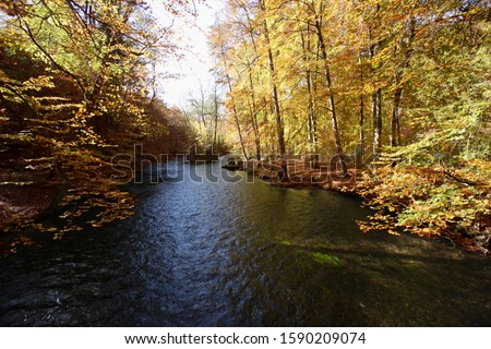 Autumnal forest and Wuerm River, Wuerm Valley, Bavaria, Germany