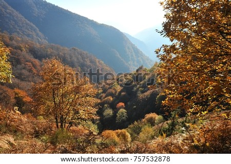 Autumnal Forest at the Mountainside of Veddasca Valley east of Lago Maggiore, Tessin, Italien #757532878