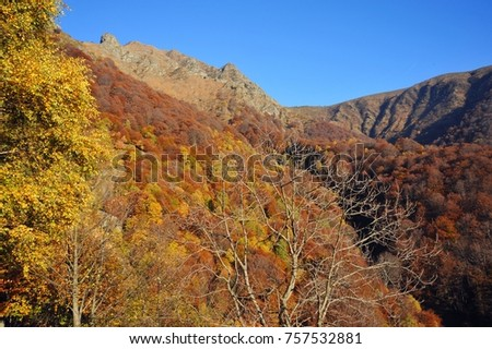 Autumnal Forest at the Mountainside of Veddasca Valley east of Lago Maggiore, Tessin, Italien #757532881