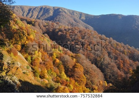 Autumnal Forest at the Mountainside of Veddasca Valley east of Lago Maggiore, Tessin, Italien #757532884